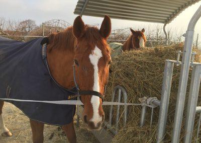 pension pour chevaux vaud