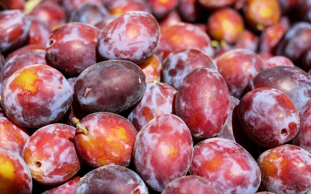 prunes crissier